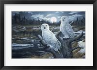 Framed Snowy Owls