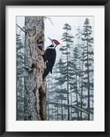 Framed Piliated Woodpeckers