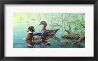 Framed Wood Ducks