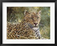 Framed Leopard Portrait