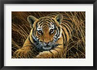 Framed Tiger Cub