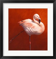 Framed Flame Bird Flamingo