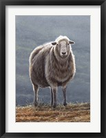 Framed Herdwick Sheep