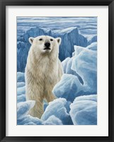 Framed Ice Bear Polar Bear
