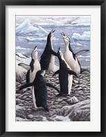 Framed Chorus Chinstrap Penguins
