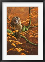 Framed Autumn Tawny Owl