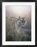 Framed Tiger At Dawn