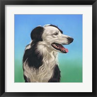 Framed Collie Jud