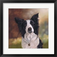 Framed Collie Perdy