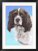Framed Springer Spaniel Zac