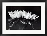 Framed Profile In Black & White