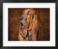 Framed Bloodhound Portrait