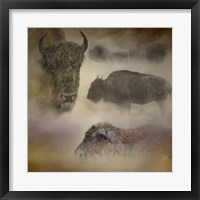 Framed Buffalo Dreams