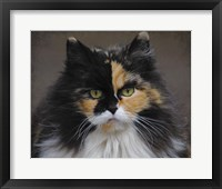 Framed Calico Cat Portrait