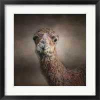 Framed Eat Your Veggies Camel