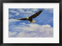 Framed Fly High Bald Eagle