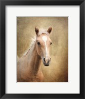 Framed Golden Girl Palomino Horse