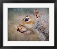 Gray Squirrel Portrait Framed Print