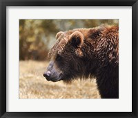 Framed Grizzly Watch