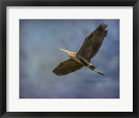 Framed Heron Overhead