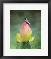 Framed Hummingbird And The Lotus Flower