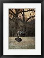 Framed Low Flyer Bald Eagle
