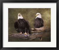 Framed Mates Bald Eagle Pair