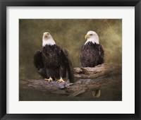 Framed Mates Bald Eagle Pair