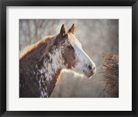Framed No Sharing Horse