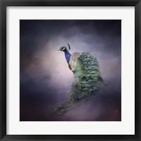 Peacock 11 Framed Print