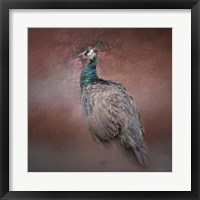 Peacock 7 Framed Print