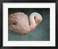 Pink Flamingo 2 Framed Print