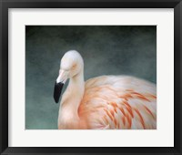 Pink flamingo 3 Framed Print