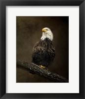 Framed Portrait Of An Eagle