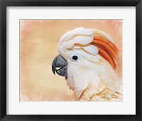 Framed Salmon Crested Cockatoo Portrait 1