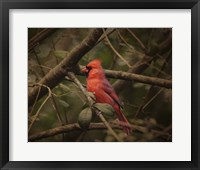 Song Of The Red Bird 1 Framed Print