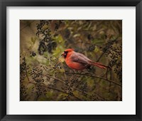 Song Of The Red Bird 2 Framed Print