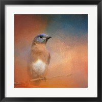 Framed Summer Day Bluebird