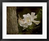 Framed Scent Of The Gardenia