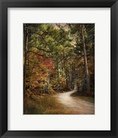 Autumn Forest 2 Framed Print