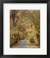 Autumn Passage 2 Framed Print