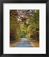 Autumn Passage 3 Framed Print