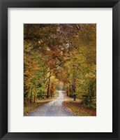 Autumn Passage 4 Framed Print