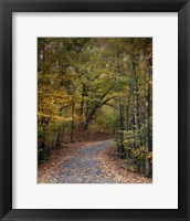Autumn Passage 5 Framed Print