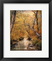 Autumn Riches 1 Framed Print