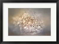 Framed Blushing Silver And Gold Peony