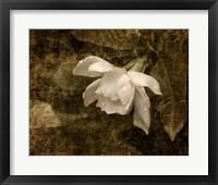 Framed Cape Jasmine Gardenia 2
