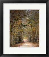 Chickasaw Forest In Autumn 2 Framed Print