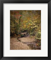 Framed Creek Bed In Autumn