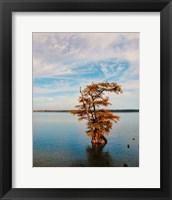 Cypress In Autumn 1 Framed Print